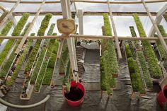 'Deep Winter' greenhouse grows veggies year-round