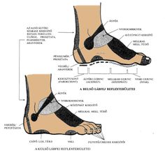 láb oldalnézetből Acupressure, Chelsea Boots, Ankle, Thyroid, Health, Shoes, Medicine, Zapatos, Health Care