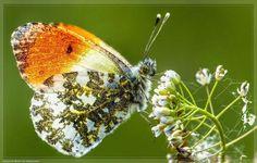 50 fascinantes fotografias de borboletas coloridas - Metamorfose Digital