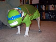 teenage mutant ninja turtles dog costume- oh my goodness! Teenage Mutant Ninja Turtles, Ninja Turtles Movie, Ninga Turtles, Teenage Ninja, Dog Costumes, Halloween Costumes, Animal Costumes, Halloween Diy, Happy Halloween