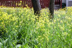 Käsintehtyä ja kaunista: Mailman ainoo Pispala House Landscape, Herbs, Plants, Museum, Herb, Plant, Planets, Medicinal Plants