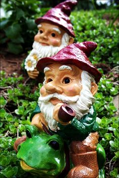 Betters Gnomes & Gardens
