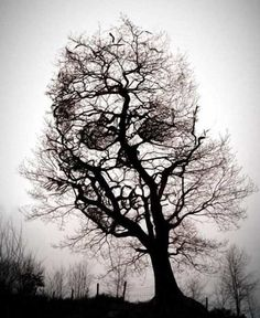 tree...another good pic to print out and frame for Halloween decoration.
