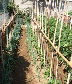 Growing Food For Beginners Vegetable Garden For Beginners, Gardening For Beginners, Gardening Tips, Compost Maker, Compost Tea, Planting Vegetables, Organic Vegetables, Vegetable Gardening, Garden Cultivator
