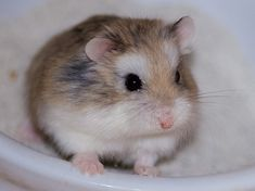Jacob has a hamster named Rocky!