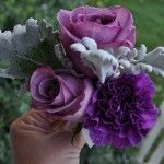 Purple Wrist Corsage made of Blue Curiosa Roses, Purple Florigene Carnation, and Dusty Miller