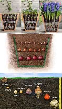 - How nice it is to plant bulb flowers - in an unusual way Как красиво посадить луковичные aufstrich dessert pflanzen recipes rezept salad salat toast Garden Bulbs, Planting Bulbs, Garden Planters, Herb Garden, Planting Flowers, Bonsai Garden, Flowers Garden, Blooming Flowers, Garden Rack