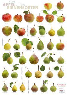 Apfel- und Birnensorten