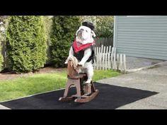 Cowboy Bulldog - YouTube