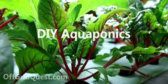 How To: Easy Backyard Aquaponics (Video)