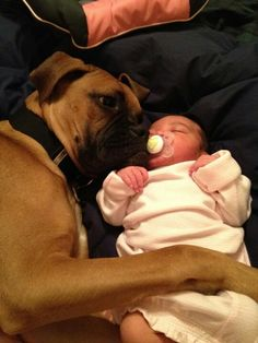 boxer dogs are the greatest.they are so gentle with children! Boxer Mom, Funny Boxer, Boxer And Baby, Funny Dogs, Boxer Breed, Boxer Puppies, I Love Dogs, Puppy Love, Cute Dogs