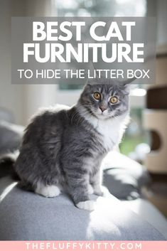 There IS a solution to the ugly cat litter box - hide it inside cat litter boxfurniture! Click to read our top 5 recommendations. More at fluffykitty.com | #catfurniture #cats #catguides #catblog #litterbox Cat Furniture, Furniture Ideas, Cat Apartment, Diy Cat Bed, Ugly Cat, Cat Towers, Cat Enclosure, Cat Pillow, Cat Room
