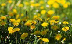 flower - Full HD Background