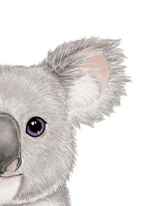 Baby Koala Art Baby Room Print Koala Print Koala Painting