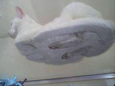 This is where cats' feet go when they settle into sphinx pose... Am finding this irrationally funny.