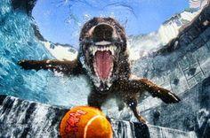 Underwater Dog Photography 7