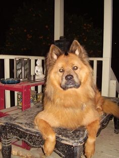 ChowGerman Shepherd Mix SIAM, I LOVE YOU! Pinterest
