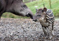 Les 39 bébés animaux les plus craquants du monde animal qui vous feront fondre de tendresse