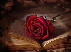Dia de San Valentin- Dia de los Enamorados
