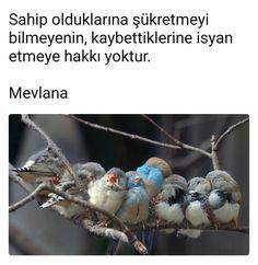 #mevlana