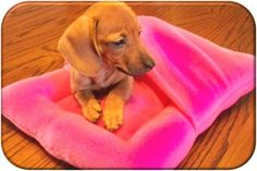 DIY dog snuggle bed