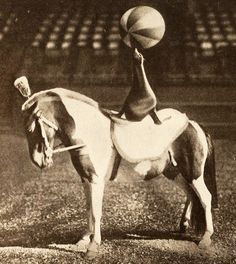 Early 1900's - this is Wilmer who was with the Barnum and Bailey Circus. Wilmer was a sea lion who could ride on horseback