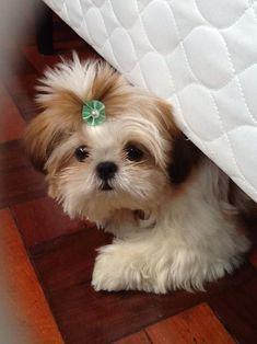 Puppie on We Heart It http://weheartit.com/entry/88322668/via/Luna_mi_Angel