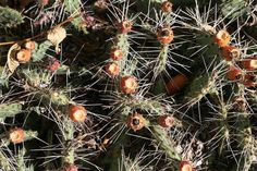 Closeup view of green cactus as a background - Stock Photo ,