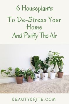 6 Houseplants To De-