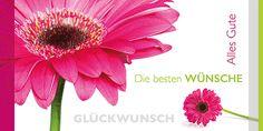 Glückwunschkarte 006723-836, DIN-lang Format, Gerbera, inkl. Kuvert. http://www.litei.de/glueckwunsch-karten/gluckwunschkarte-006723-836-din-lang-format-gerbera-inkl-kuvert