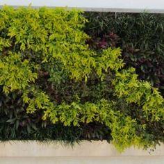 Green Living Wall Gallery | Green Living Technologies