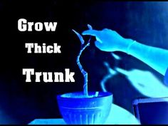 Super Easy Way to Grow Bonsai Thick Trunk
