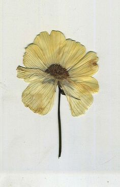 ♥ Pressed Flowers ♥