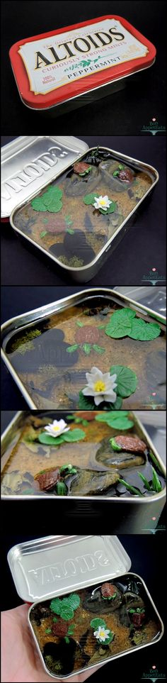 Commission: Large Altoids Turtle Pond by Bon-AppetEats.deviantart.com on @deviantART