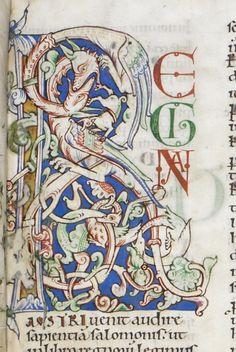 illuminated manuscript   Tumblr