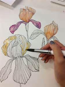 line drawings of irises - Bing Images