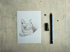 ritratto di gatto a matita di vumap su DaWanda.com