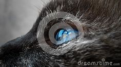 My little kitty,in macro photo eyes