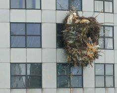 nest built by Dutch sculptor onto the side of a Rotterdam apartment building