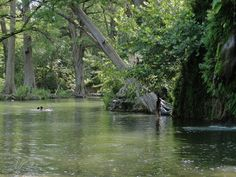 Krause Springs in Spicewood, Texas, about 30 miles west of Austin // Texas Parks and Wildlife Department