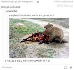 Koalas are pretty metal