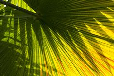 palm shadow by Andrea Franz - Photo 124695051 - 500px