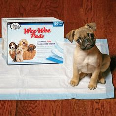 Four Paws Wee-Wee Puppy Housebreaking Pads, 100-Pack Box - http://www.thepuppy.org/four-paws-wee-wee-puppy-housebreaking-pads-100-pack-box/