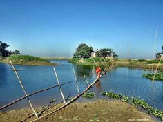 If you do not mind: The bamboo bridge