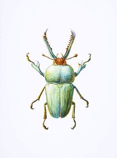 Green Stag Beetle-Beetle, Coleoptera, stag beetle, insect, bugbyDinahWells