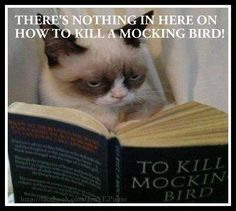 Grumpy cat, grumpy cat meme, grumpy cat jokes …For the funniest quotes and hilarious pictures visit www.bestfunnyjokes4u.com