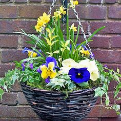 167 best spring containers images on pinterest container garden spring hanging baskets mightylinksfo