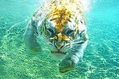 "I really love this guy (you gotta click it to appreciate it). ~ M.S.M. Gish ~ Miks' Pics ""Animals l"" board @ http://www.pinterest.com/msmgish/animals-l/"