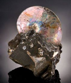 Amazing Geologist    ⚒ Ammolite with Mother of Pearl |#Geology  *Photo : © fineart .ha  visit : http://www.geologyin.com/