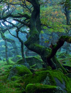 Padley Gorge. Peak District, Derbyshire, England